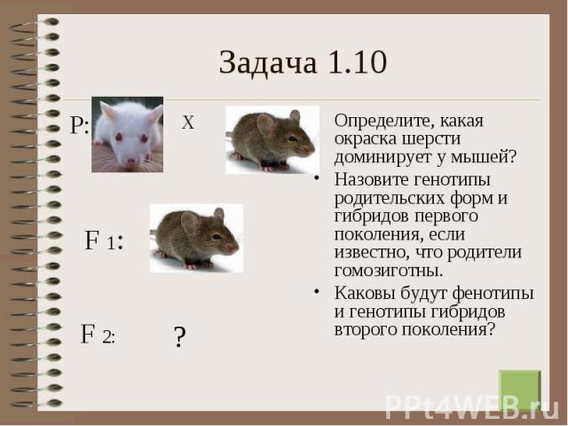 Определите, какая окраска шерсти доминирует у мышей? Определите, какая окраска шерсти доминирует у мышей? Назовите генотипы родительских форм и гибридов первого поколения, если известно, что родители гомозиготны. Каковы будут фенотипы и генотипы гиб…