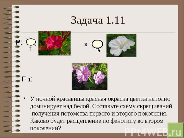У ночной красавицы красная окраска цветка неполно доминирует над белой. Составьте схему скрещиваний получения потомства первого и второго поколения. Каково будет расщепление по фенотипу во втором поколении? У ночной красавицы красная окраска цветка …