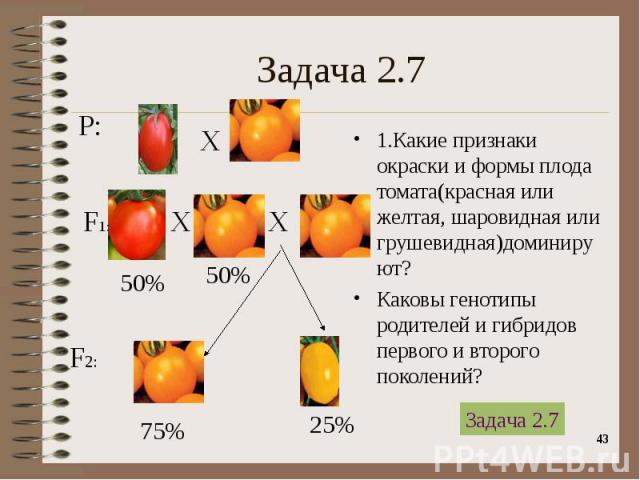 1.Какие признаки окраски и формы плода томата(красная или желтая, шаровидная или грушевидная)доминируют? 1.Какие признаки окраски и формы плода томата(красная или желтая, шаровидная или грушевидная)доминируют? Каковы генотипы родителей и гибридов пе…
