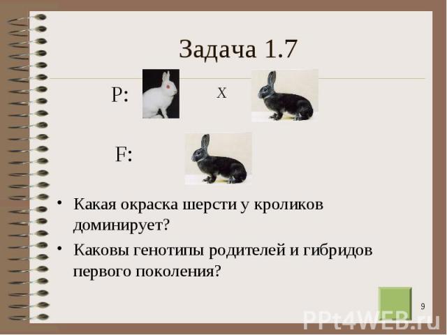Какая окраска шерсти у кроликов доминирует? Какая окраска шерсти у кроликов доминирует? Каковы генотипы родителей и гибридов первого поколения?