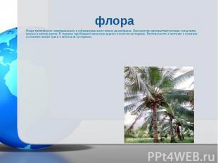 Флора тропического, экваториального и субэкваториального поясов разнообразна. По
