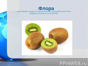 Флору Евразии в основном составляют растения из территорий России и Китая. Флору
