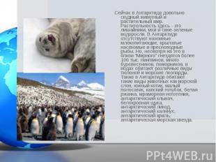 Сейчас в Антарктиде довольно скудный животный и растительный мир. Растительность