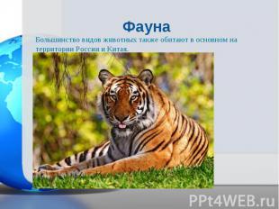 Большинство видов животных также обитают в основном на территории России и Китая