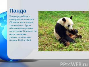 Панда-редчайшее и вымирающее животное. Обитают как в неволе, так и на воле. Ареа