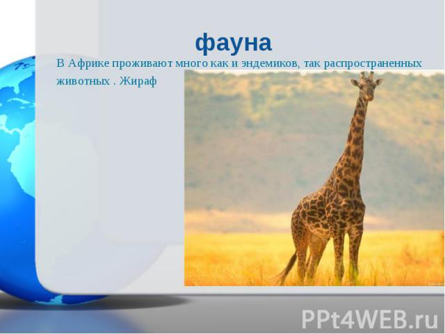 В Африке проживают много как и эндемиков, так распространенных В Африке проживают много как и эндемиков, так распространенных животных . Жираф