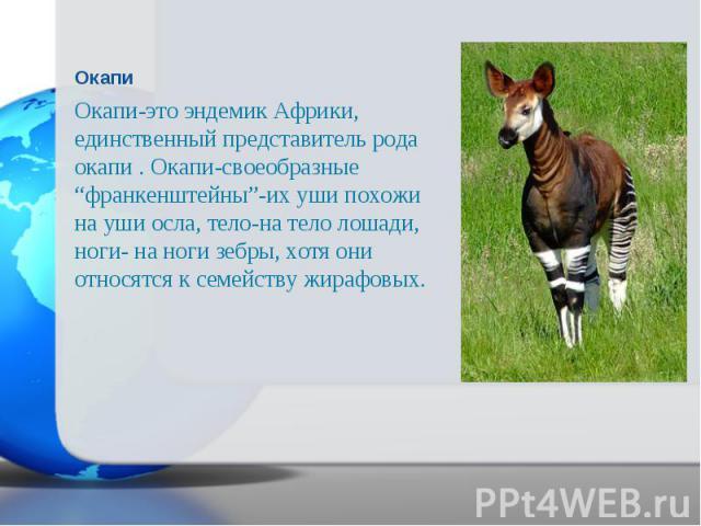 """Окапи-это эндемик Африки, единственный представитель рода окапи . Окапи-своеобразные """"франкенштейны""""-их уши похожи на уши осла, тело-на тело лошади, ноги- на ноги зебры, хотя они относятся к семейству жирафовых. Окапи-это эндемик Африки, единственны…"""