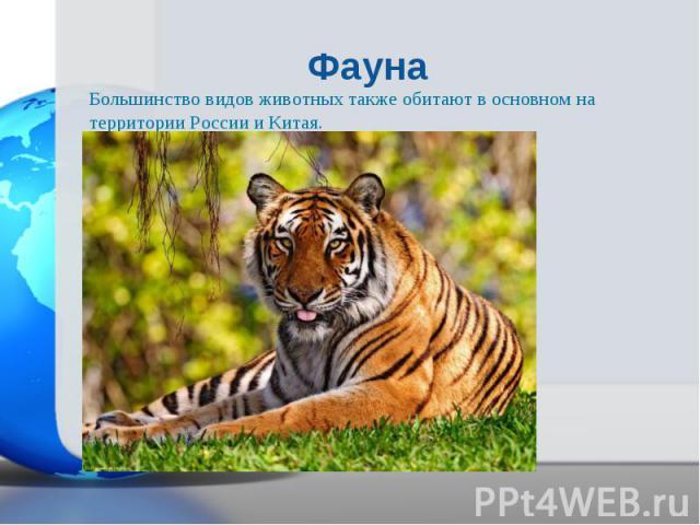Большинство видов животных также обитают в основном на территории России и Китая. Большинство видов животных также обитают в основном на территории России и Китая.