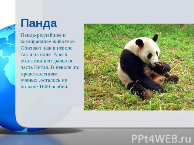 Панда-редчайшее и вымирающее животное. Обитают как в неволе, так и на воле. Ареал обитания-центральная часть Китая. В неволе ,по представлениям ученых ,осталось не больше 1600 особей. Панда-редчайшее и вымирающее животное. Обитают как в неволе, так …