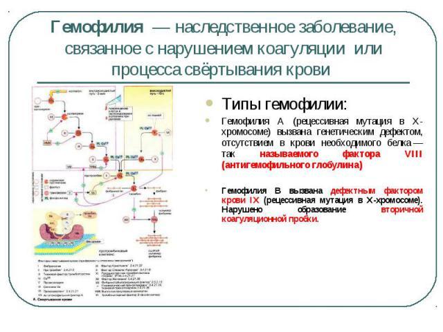 Типы гемофилии: Типы гемофилии: Гемофилия A (рецессивная мутация в X-хромосоме) вызвана генетическим дефектом, отсутствием в крови необходимого белка— так называемого фактора VIII (антигемофильного глобулина) Гемофилия B вызвана дефектным факт…