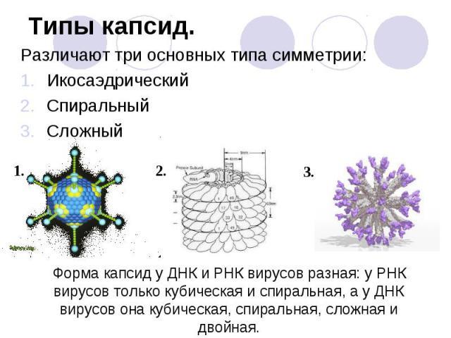 Различают три основных типа симметрии: Различают три основных типа симметрии: Икосаэдрический Спиральный Сложный