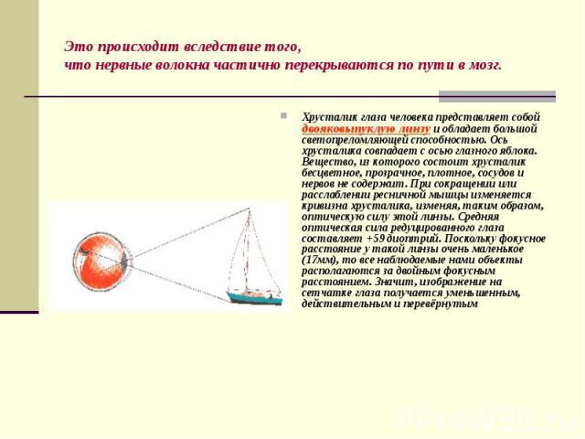 Хрусталик глаза человека представляет собой двояковыпуклую линзу и обладает большой светопреломляющей способностью. Ось хрусталика совпадает с осью глазного яблока. Вещество, из которого состоит хрусталик бесцветное, прозрачное, плотное, сосудов и н…