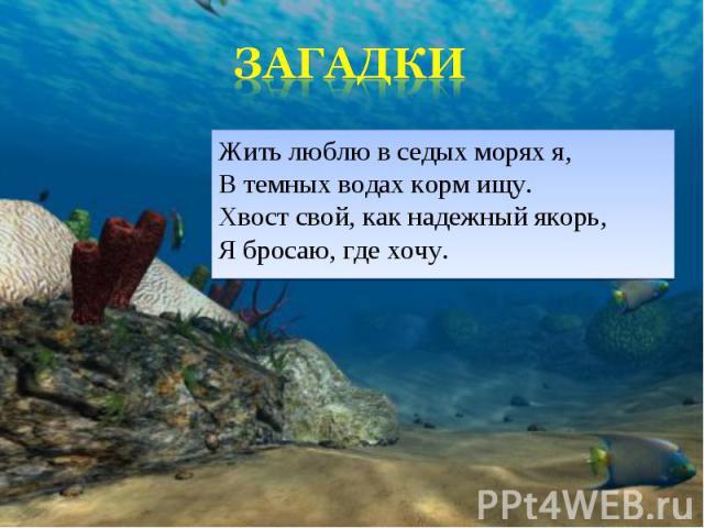 Жить люблю в седых морях я, В темных водах корм ищу. Хвост свой, как надежный якорь, Я бросаю, где хочу. Жить люблю в седых морях я, В темных водах корм ищу. Хвост свой, как надежный якорь, Я бросаю, где хочу.