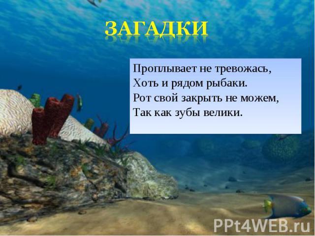 Проплывает не тревожась, Хоть и рядом рыбаки. Рот свой закрыть не можем, Так как зубы велики. Проплывает не тревожась, Хоть и рядом рыбаки. Рот свой закрыть не можем, Так как зубы велики.