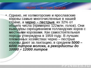 Однако, не холмогорские и ярославские коровы самые многочисленные в нашей стране