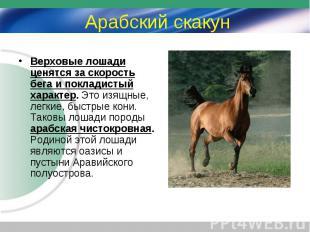 Верховые лошади ценятся за скорость бега и покладистый характер. Это изящные, ле