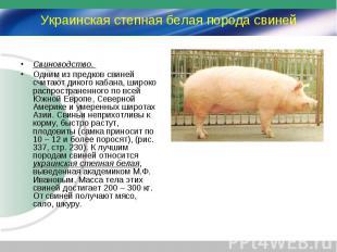 Свиноводство. Свиноводство. Одним из предков свиней считают дикого кабана, широк