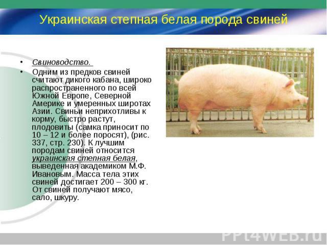 Свиноводство. Свиноводство. Одним из предков свиней считают дикого кабана, широко распространенного по всей Южной Европе, Северной Америке и умеренных широтах Азии. Свиньи неприхотливы к корму, быстро растут, плодовиты (самка приносит по 10 – 12 и б…