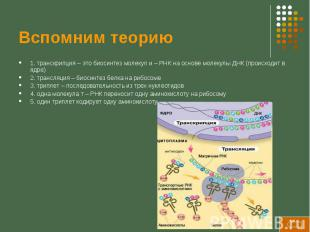 Вспомним теорию 1. транскрипция – это биосинтез молекул и – РНК на основе молеку
