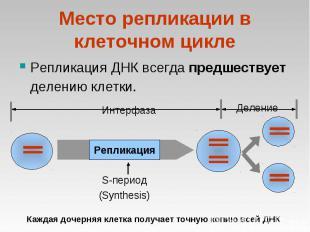 Репликация ДНК всегда предшествует делению клетки. Репликация ДНК всегда предшес