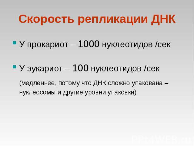 У прокариот – 1000 нуклеотидов /сек У прокариот – 1000 нуклеотидов /сек У эукариот – 100 нуклеотидов /сек (медленнее, потому что ДНК сложно упакована – нуклеосомы и другие уровни упаковки)