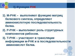 3).Функции РНК 3).Функции РНК 1). М-РНК – выполняют функцию матриц белкового син