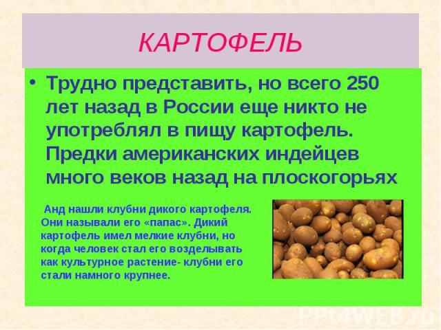 Трудно представить, но всего 250 лет назад в России еще никто не употреблял в пищу картофель. Предки американских индейцев много веков назад на плоскогорьях Трудно представить, но всего 250 лет назад в России еще никто не употреблял в пищу картофель…