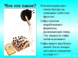 Плесени вырастают очень быстро на гниющем хлебе или фруктах. Плесени вырастают о