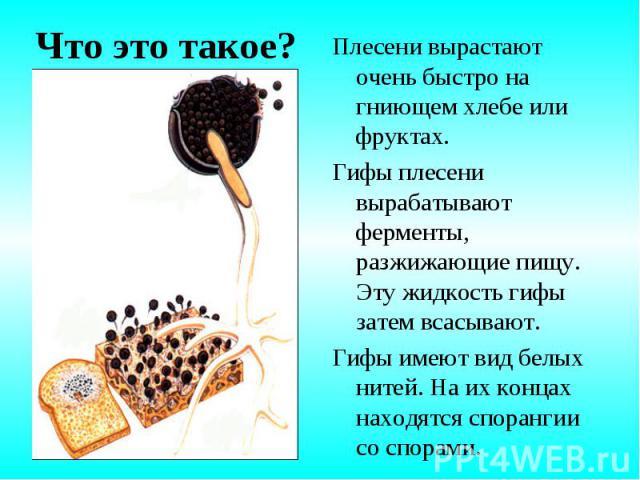 Плесени вырастают очень быстро на гниющем хлебе или фруктах. Плесени вырастают очень быстро на гниющем хлебе или фруктах. Гифы плесени вырабатывают ферменты, разжижающие пищу. Эту жидкость гифы затем всасывают. Гифы имеют вид белых нитей. На их конц…