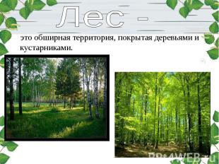 это обширная территория, покрытая деревьями и кустарниками. это обширная террито