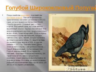 Голубой Ширококлювый Попугай Птица семейства попугаевых, подсемейства настоящие