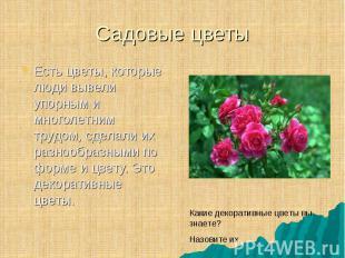 Есть цветы, которые люди вывели упорным и многолетним трудом, сделали их разнооб