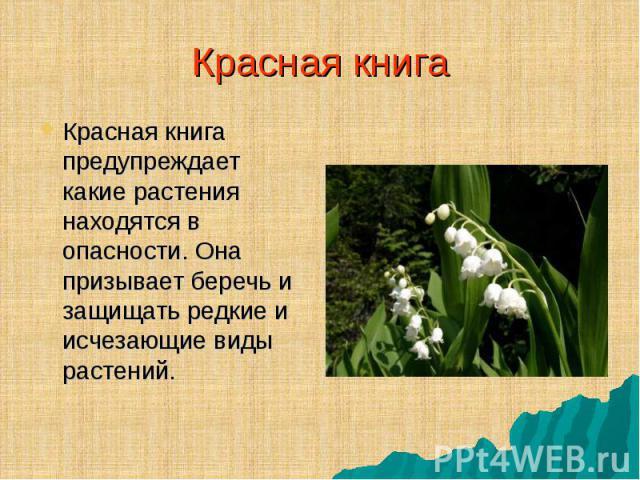 Красная книга предупреждает какие растения находятся в опасности. Она призывает беречь и защищать редкие и исчезающие виды растений. Красная книга предупреждает какие растения находятся в опасности. Она призывает беречь и защищать редкие и исчезающи…