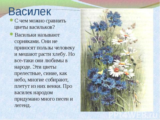 С чем можно сравнить цветы васильков? С чем можно сравнить цветы васильков? Васильки называют сорняками. Они не приносят пользы человеку и мешают расти хлебу. Но все-таки они любимы в народе. Эти цветы прелестные, синие, как небо, многие собирают, п…