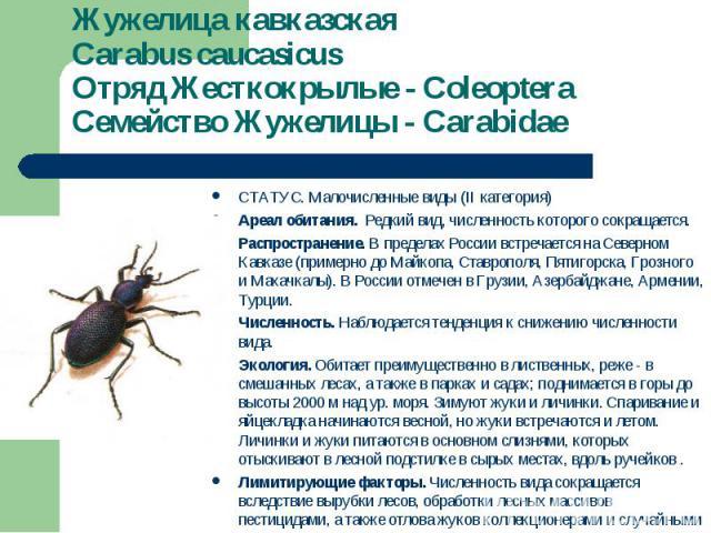 СТАТУС. Малочисленные виды (II категория) СТАТУС. Малочисленные виды (II категория) Ареал обитания. Редкий вид, численность которого сокращается. Распространение. В пределах России встречается на Северном Кавказе (примерно до Майкопа, Ставрополя, Пя…