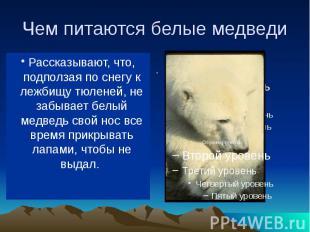 Чем питаются белые медведи В море ловит белый медведь рыбу, на льдинах (да и в в