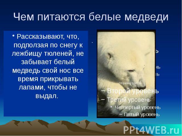 Чем питаются белые медведи В море ловит белый медведь рыбу, на льдинах (да и в воде тоже) — тюленей, на берегу — песцов, пеструшек, северных оленей. Когда голоден, ест и падаль, водоросли, мхи.