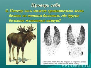 6. Почему лось может сравнительно легко бегать по топким болотам, где другие бол