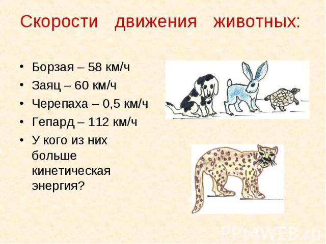 Борзая – 58 км/ч Борзая – 58 км/ч Заяц – 60 км/ч Черепаха – 0,5 км/ч Гепард – 112 км/ч У кого из них больше кинетическая энергия?