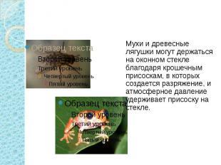 Мухи и древесные лягушки могут держаться на оконном стекле благодаря крошечным п
