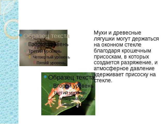 Мухи и древесные лягушки могут держаться на оконном стекле благодаря крошечным присоскам, в которых создается разряжение, и атмосферное давление удерживает присоску на стекле.
