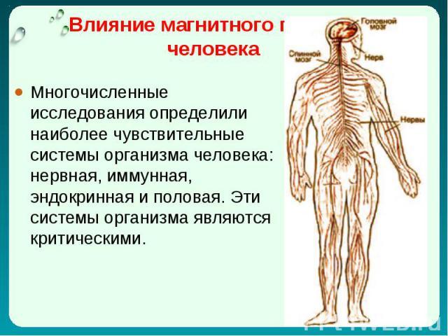 Многочисленные исследования определили наиболее чувствительные системы организма человека: нервная, иммунная, эндокринная и половая. Эти системы организма являются критическими. Многочисленные исследования определили наиболее чувствительные системы …