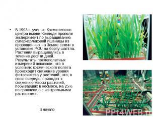 В 1993 г. ученые Космического центра имени Кеннеди провели эксперимент по выращи