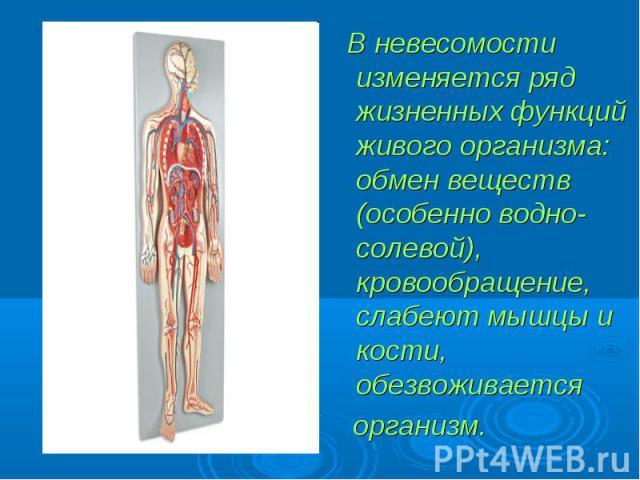 В невесомости изменяется ряд жизненных функций живого организма: обмен веществ (особенно водно-солевой), кровообращение, слабеют мышцы и кости, обезвоживается В невесомости изменяется ряд жизненных функций живого организма: обмен веществ (особенно в…