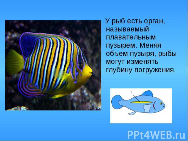 У рыб есть орган, называемый плавательным пузырем. Меняя объем пузыря, рыбы могут изменять глубину погружения. У рыб есть орган, называемый плавательным пузырем. Меняя объем пузыря, рыбы могут изменять глубину погружения.