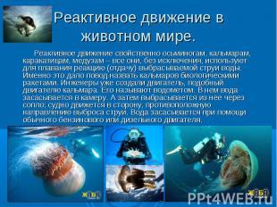 Реактивное движение свойственно осьминогам, кальмарам, каракатицам, медузам – вс