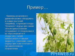 Примеры реактивного движения можно обнаружить и в мире растений. Например, созре
