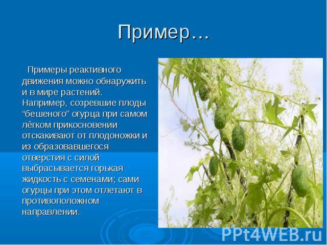 """Примеры реактивного движения можно обнаружить и в мире растений. Например, созревшие плоды """"бешеного"""" огурца при самом лёгком прикосновении отскакивают от плодоножки и из образовавшегося отверстия с силой выбрасывается горькая жидкость с семенами; с…"""