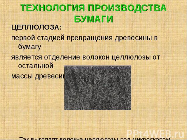 ЦЕЛЛЮЛОЗА: ЦЕЛЛЮЛОЗА: первой стадией превращения древесины в бумагу является отделение волокон целлюлозы от остальной массы древесины. Так выглядят волокна целлюлозы под микроскопом.
