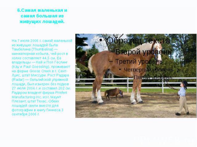 6.Самая маленькая и самая большая из живущих лошадей. На 7 июля 2006 г. самой маленькой из живущих лошадей была Тамбелина (Thumbelina) — миниатюрная кобыла, чей рост в холке составляет 44,5 см. Ее владельцы — Кей и Пол Гёслинг (Kay и Paul Goessling)…